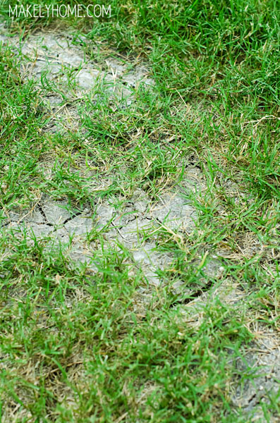 Top 10 Tips for a Drought Tolerant Grass via MakelyHome.com